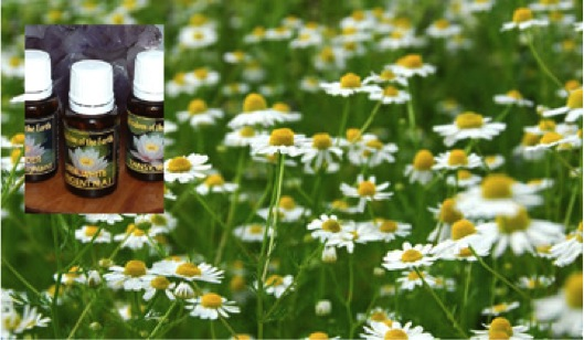 an analysis of ancient practice of using natural plant essences in alternative medicine In the history of herbalism,  so is a valuable resource for the medicinal uses of plants in ancient medicine  using and studying plants and recording the folk.