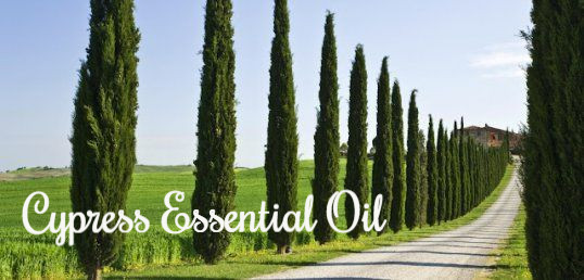 Cypress Essential Oil: Strength, Serenity, Transformation
